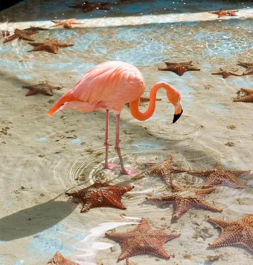 птица розовый фламинго, фото 18