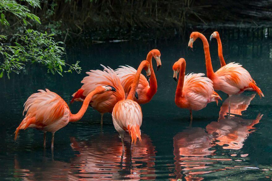 птица розовый фламинго, фото 25