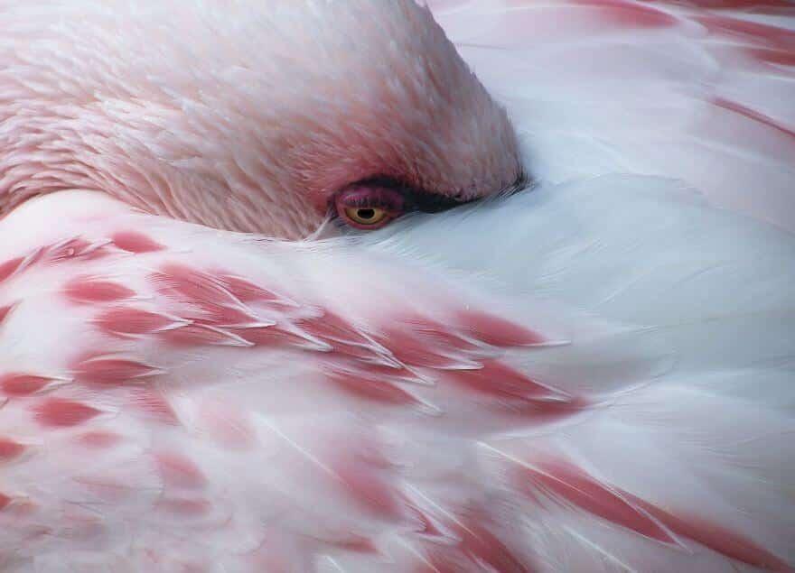 птица розовый фламинго, фото 3