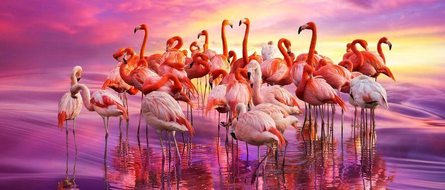 птица розовый фламинго, фото 31