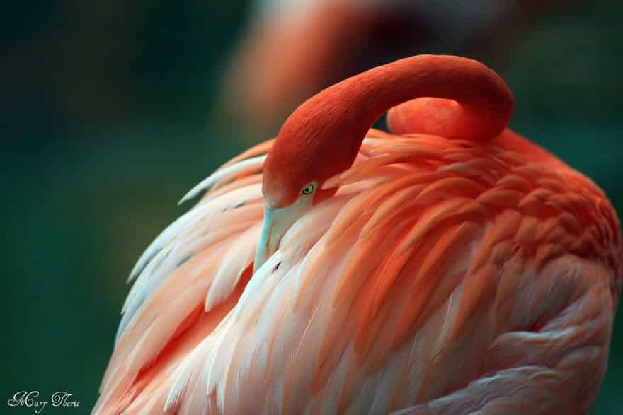 птица розовый фламинго, фото 38