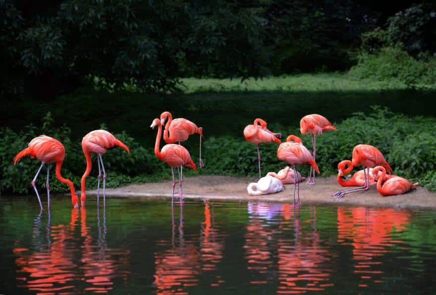 птица розовый фламинго, фото 40