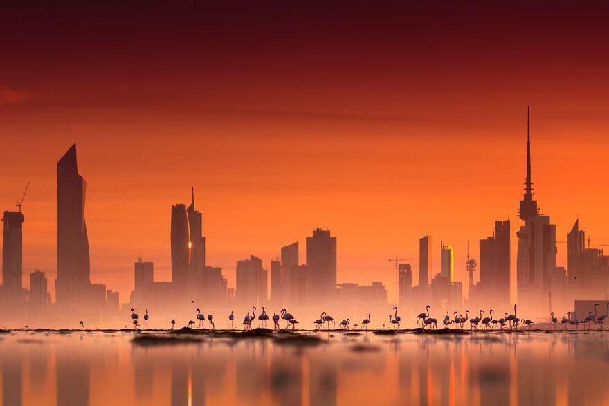 птица розовый фламинго, фото 7