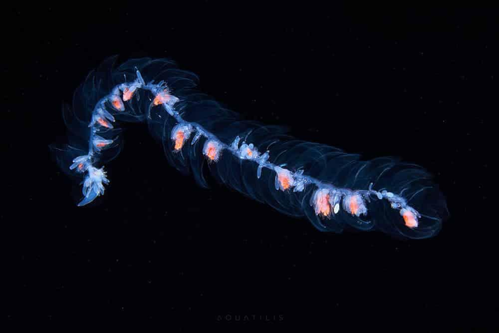 снимки удивительных существ из глубин мирового океана, фото 4