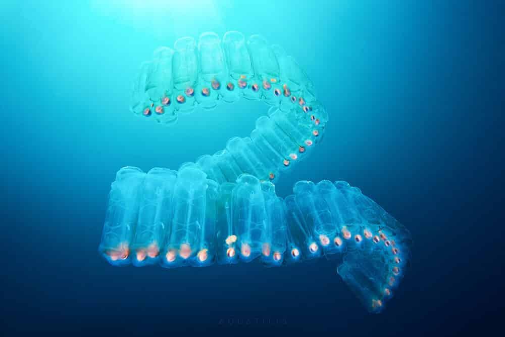 снимки удивительных существ из глубин мирового океана, фото 6
