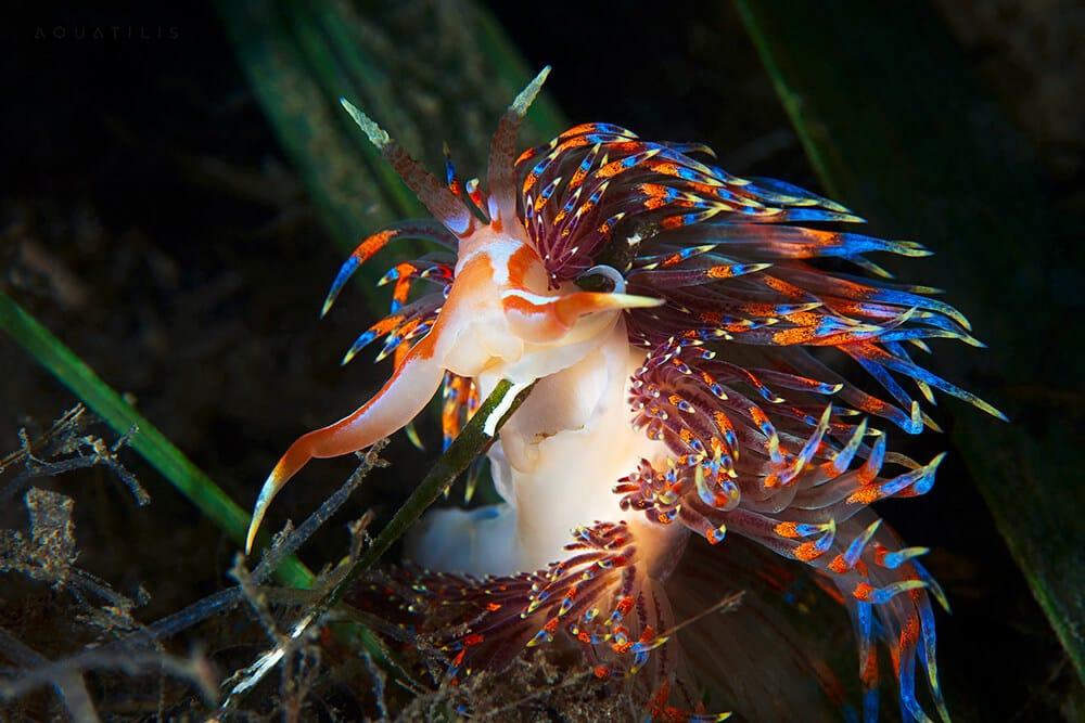 снимки удивительных существ из глубин мирового океана, фото 7