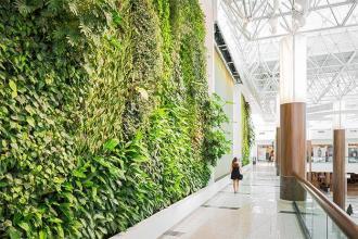 Живые зеленые стены для любителей природы