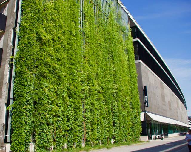Зеленые стены, фото 6