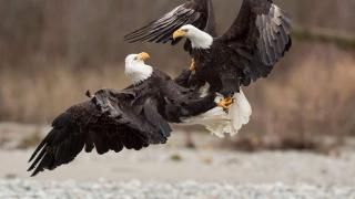 Audubon Photography Awards 2017, Победители и призеры, фото 15