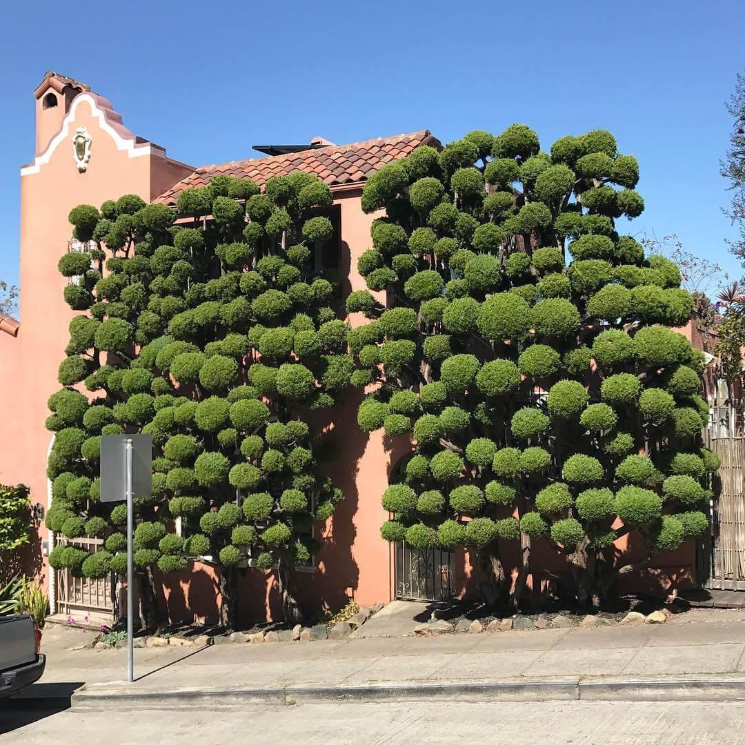 Растения с причудливой формой стрижки, фото 1
