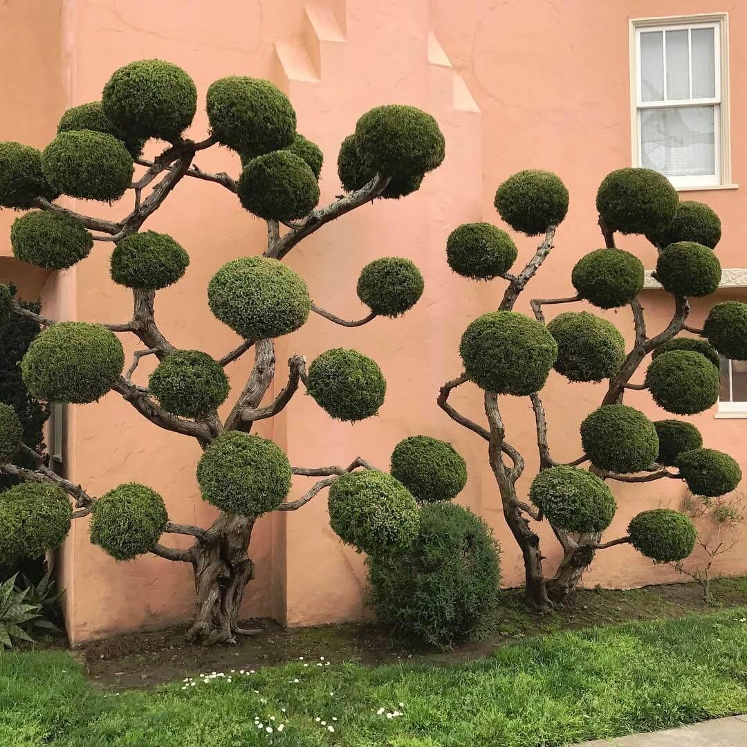 Растения с причудливой формой стрижки, фото 2