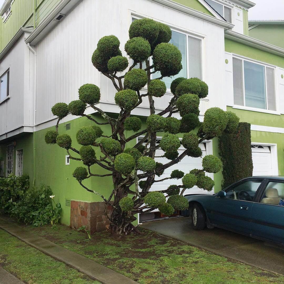 Растения с причудливой формой стрижки, фото 4