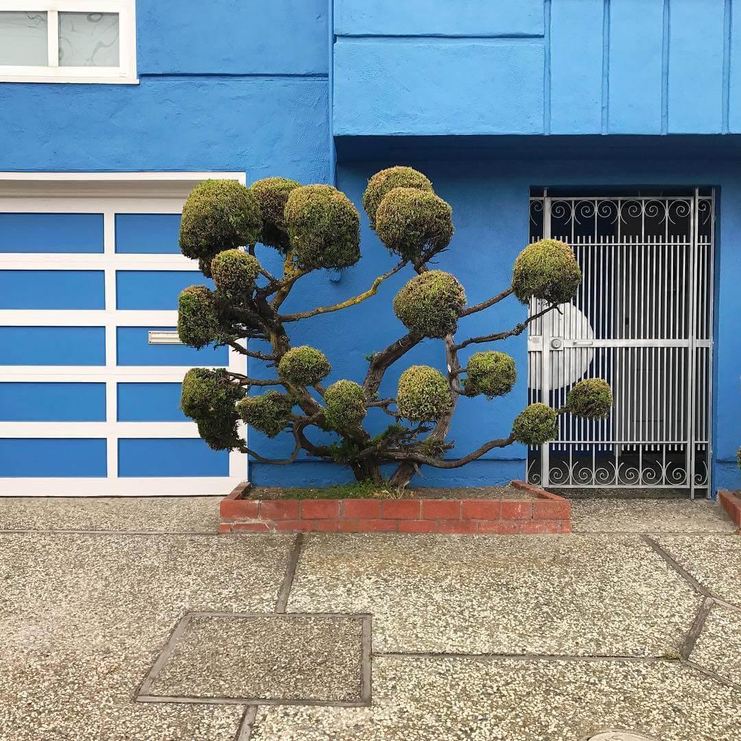 Растения с причудливой формой стрижки, фото 5