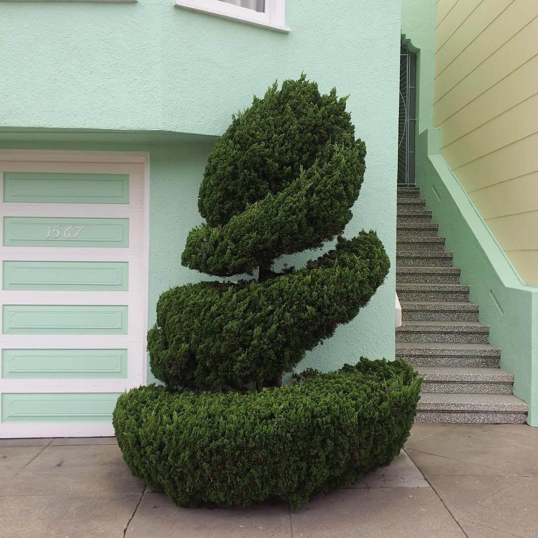 Растения с причудливой формой стрижки, фото 7