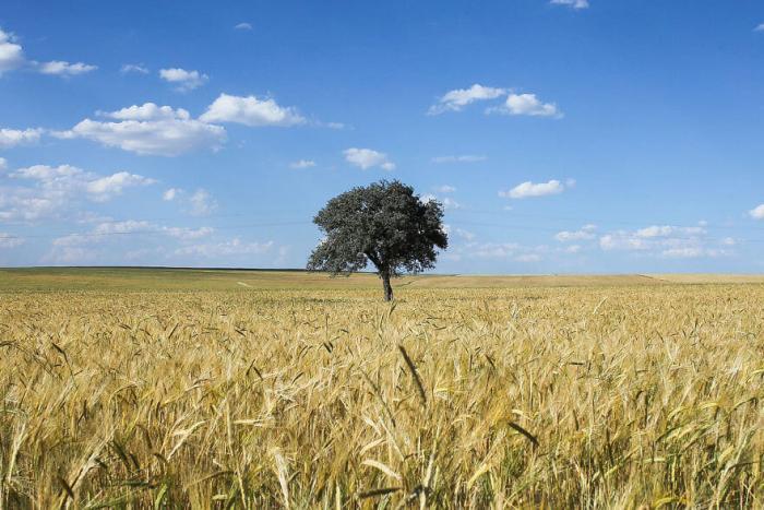 Съемка одинокого дерева в разные сезоны – короткая версия таймлапса