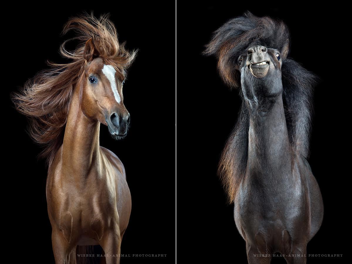 фотографии лошадей с развевающейся роскошной гривой, фото 3
