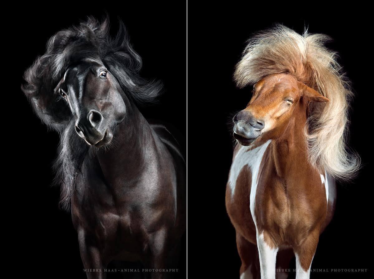 фотографии лошадей с развевающейся роскошной гривой, фото 4