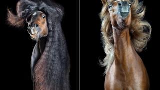 фотографии лошадей с развевающейся роскошной гривой, фото 5