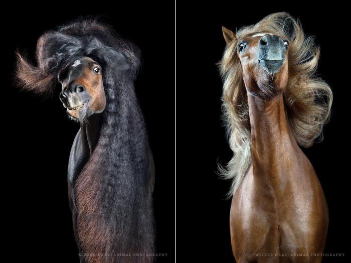 Забавные фотографии лошадей с развевающейся роскошной гривой