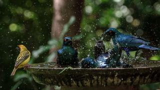 национальный парк крюгера, фото птиц 1