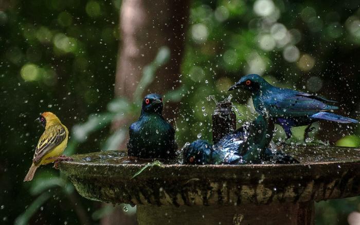 Национальный парк Крюгера – не только сафари, но и удивительные птицы