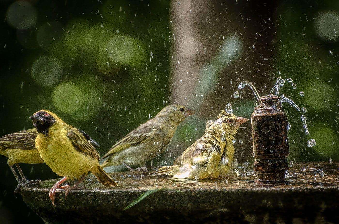 национальный парк крюгера, фото птиц 5