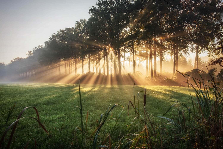 солнечные лучи в лесу, фото 1