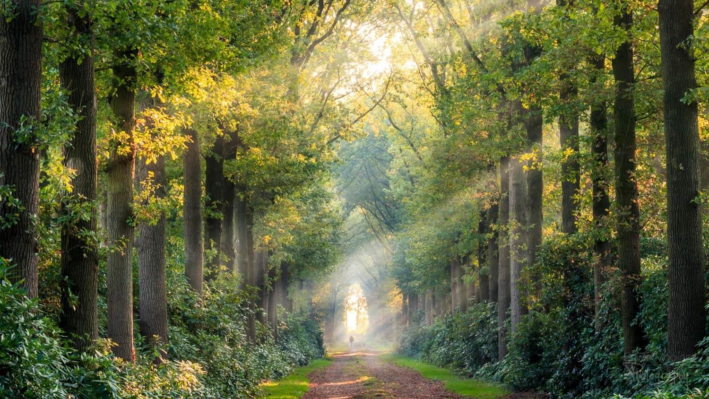 солнечные лучи в лесу, фото 10