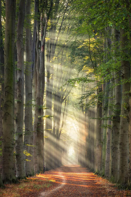 солнечные лучи в лесу, фото 11