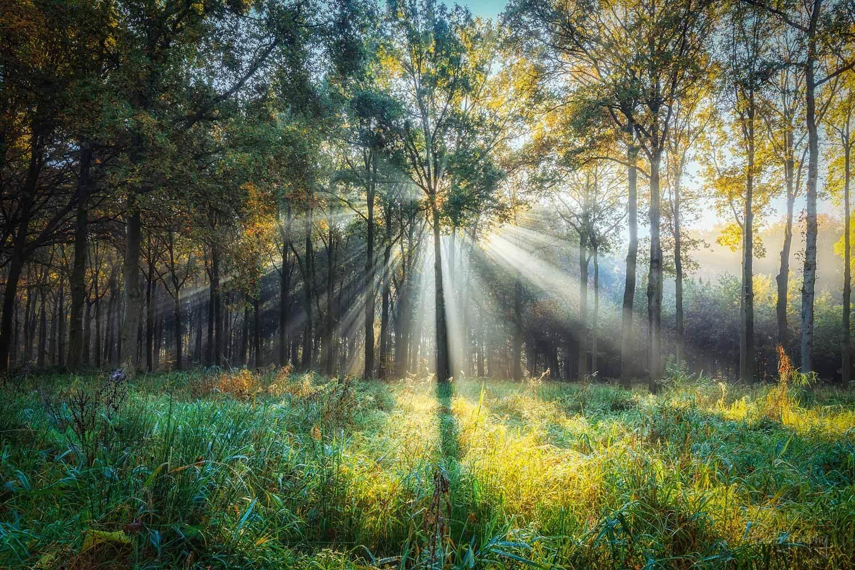 солнечные лучи в лесу, фото 12