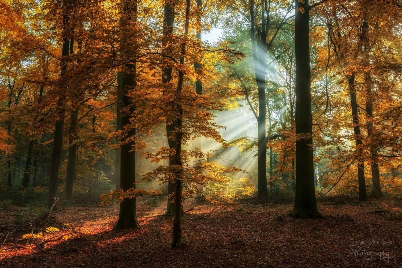 солнечные лучи в лесу, фото 13