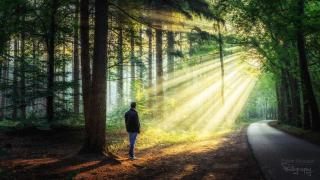 солнечные лучи в лесу, фото 14