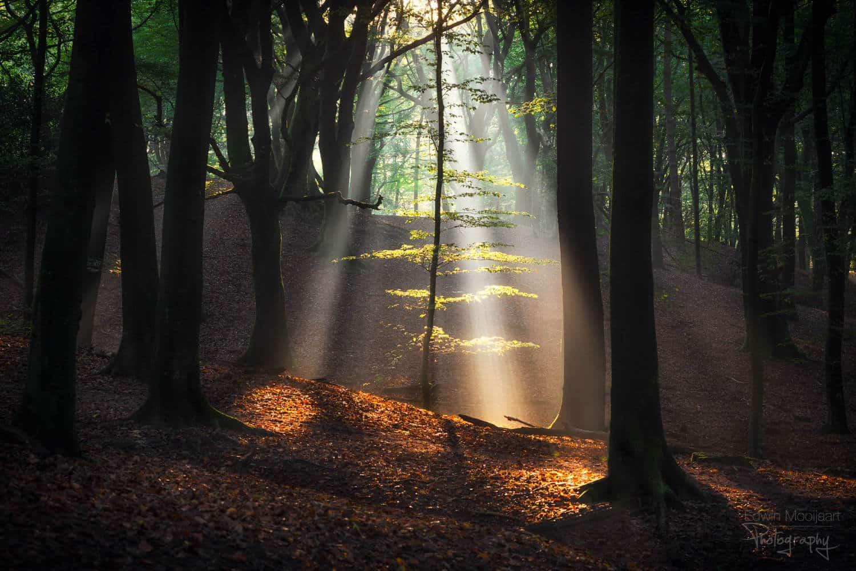 солнечные лучи в лесу, фото 15
