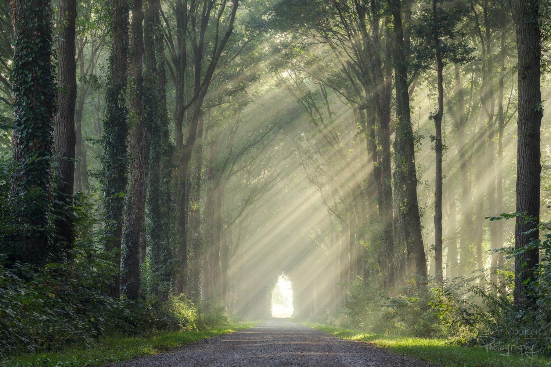 солнечные лучи в лесу, фото 16