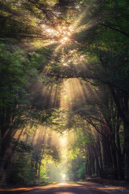 солнечные лучи в лесу, фото 17
