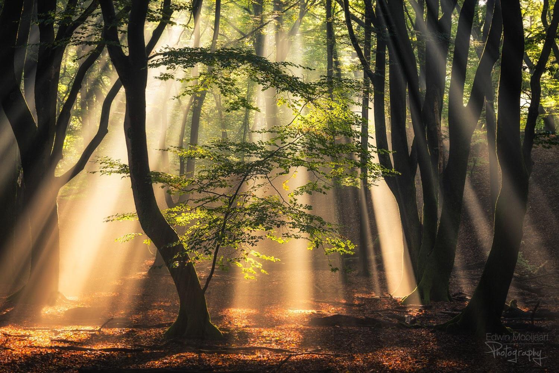 солнечные лучи в лесу, фото 2
