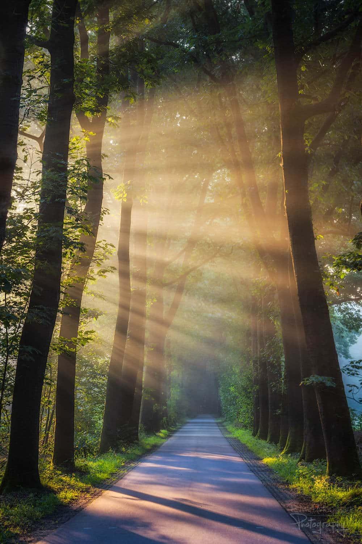 солнечные лучи в лесу, фото 3