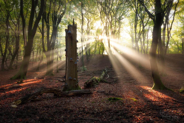 солнечные лучи в лесу, фото 4