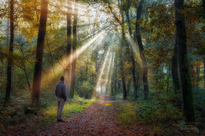 солнечные лучи в лесу, фото 5