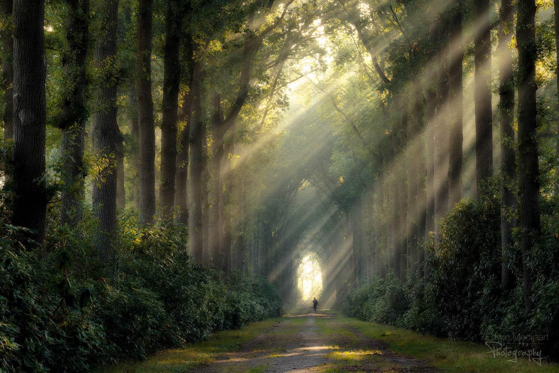 солнечные лучи в лесу, фото 6