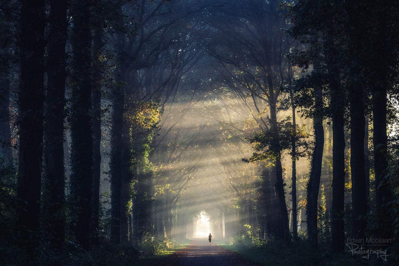 солнечные лучи в лесу, фото 7