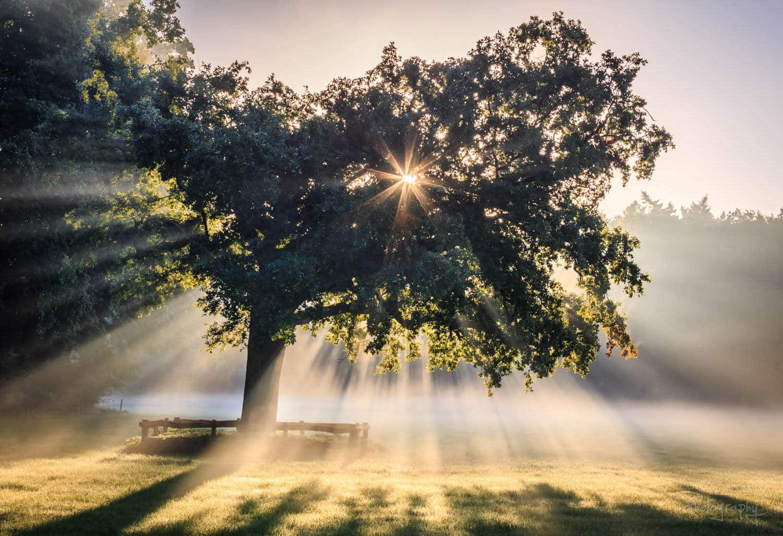 солнечные лучи в лесу, фото 8