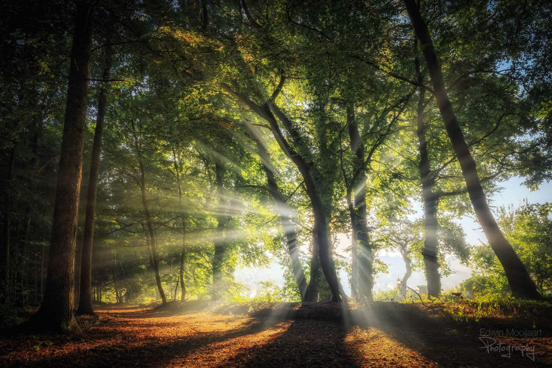 солнечные лучи в лесу, фото 9