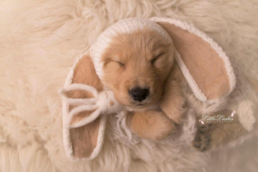 Детская фотосессия со щенком, фото 10
