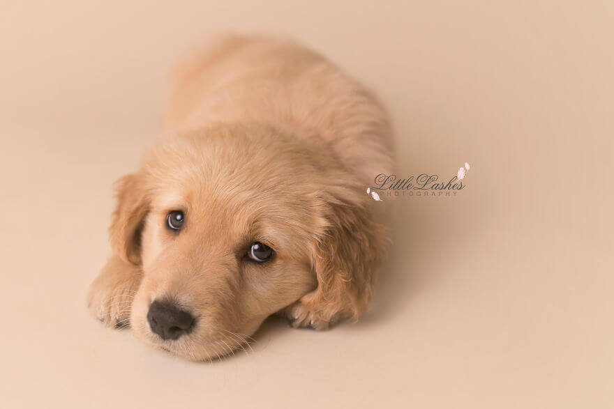 Детская фотосессия со щенком, фото 12