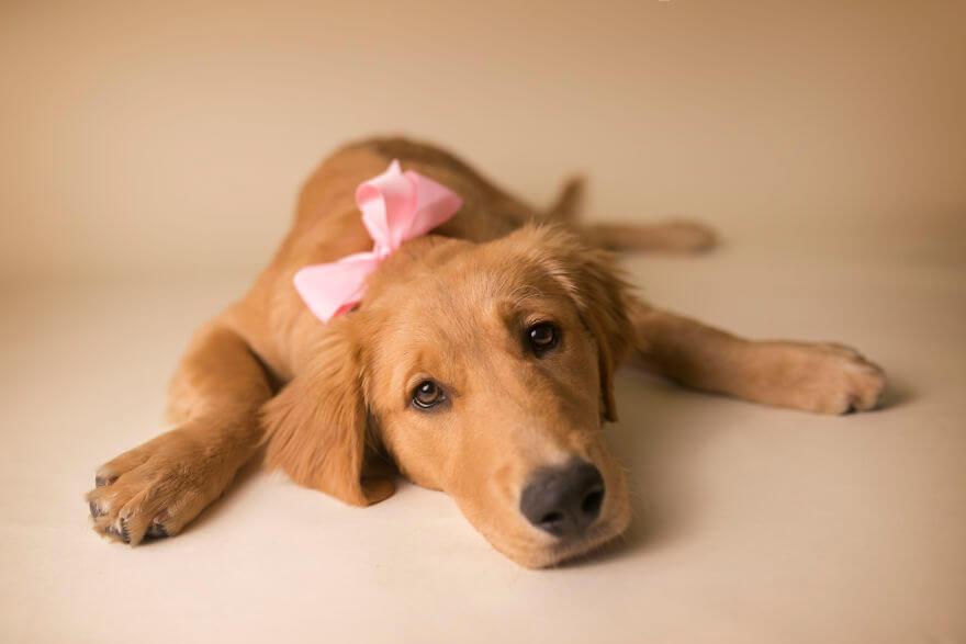 Детская фотосессия со щенком, фото 16