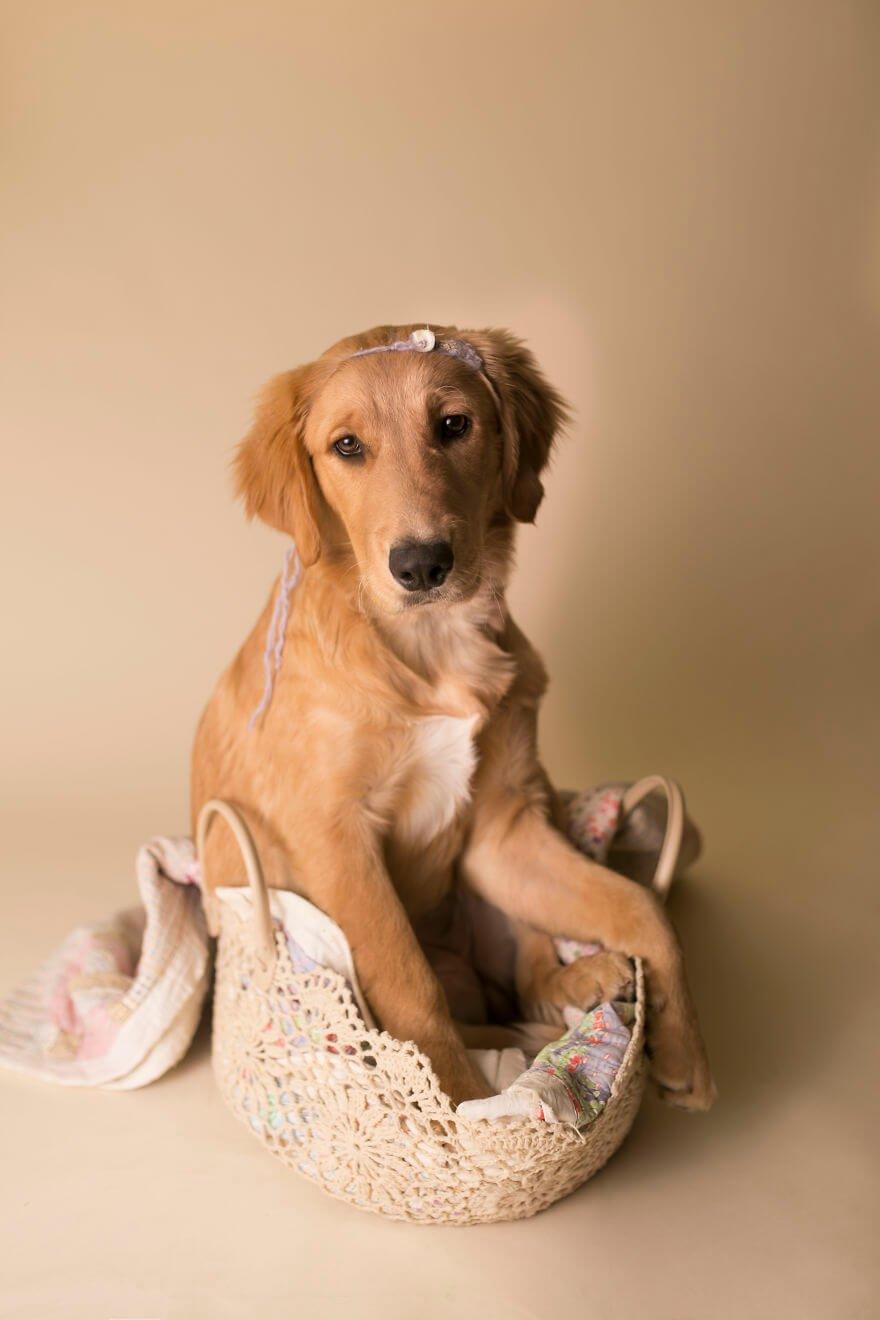 Детская фотосессия со щенком, фото 17