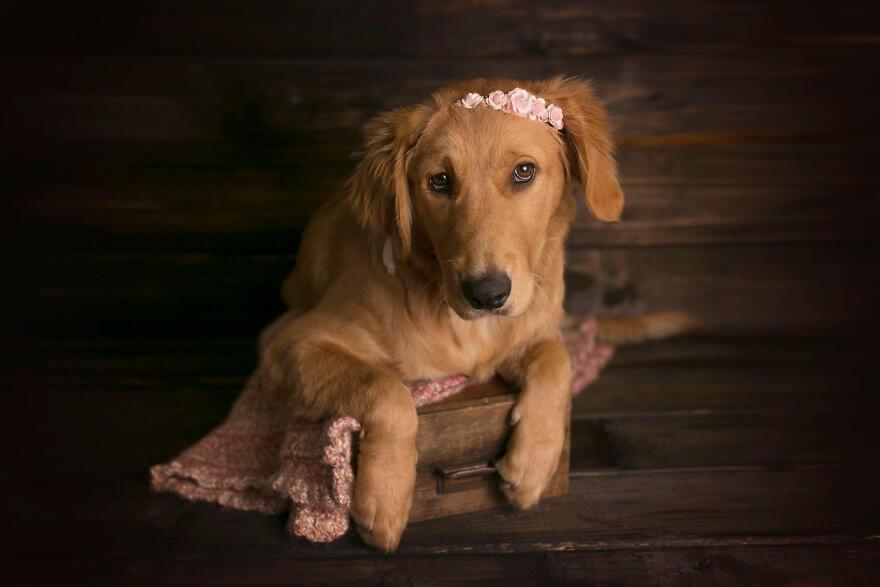 Детская фотосессия со щенком, фото 18