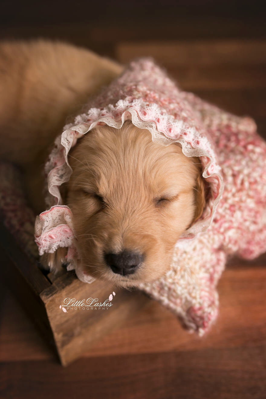 Детская фотосессия со щенком, фото 6