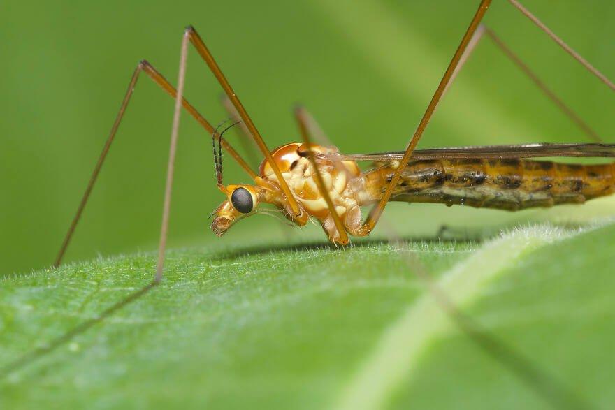 Долгоножка, фотографий насекомых и пауков